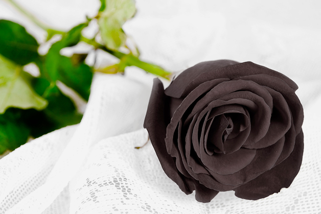 valentine_black_rose